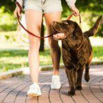 Treinamento para cachorro: a melhor forma de educar seu pet